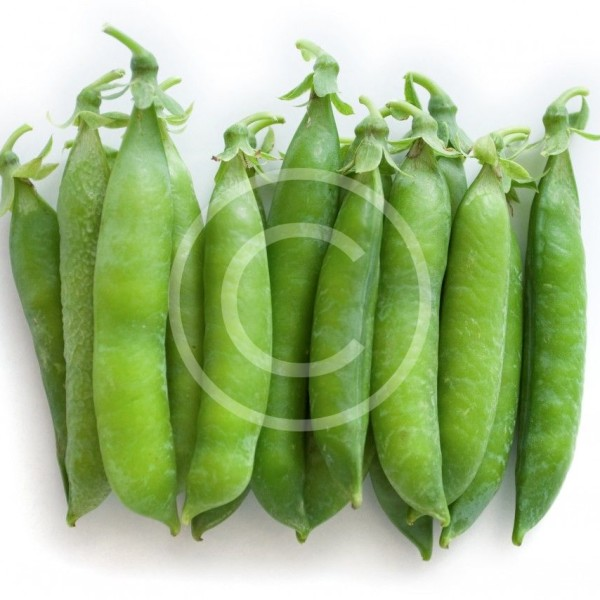 Stacked fresh green peas [pisum sativum] - top view of pods