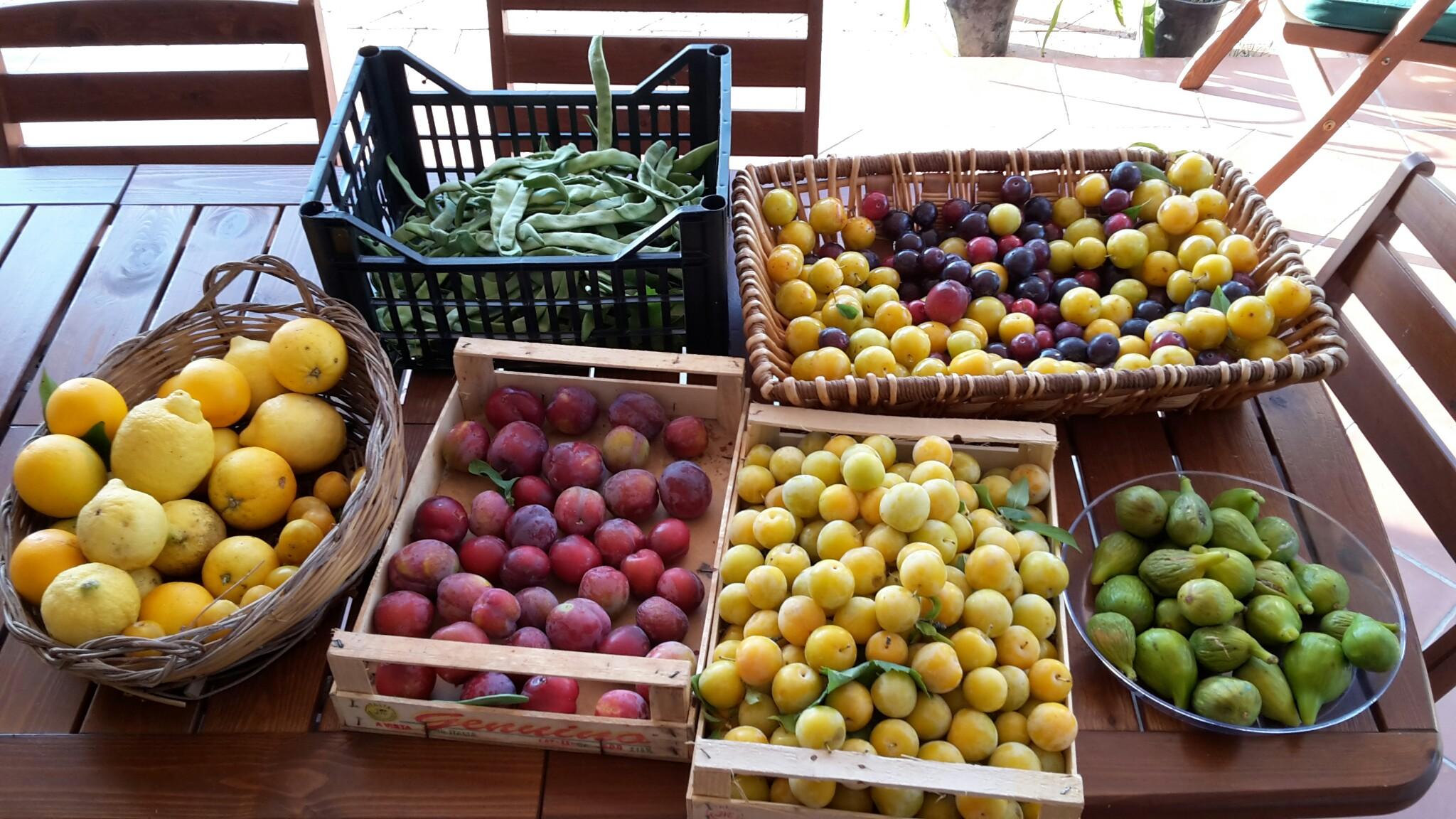 Pere, fichi, prugne, limoni, bio agricoltura, cilento